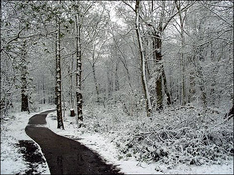 Norsey Wood photo by Ian in Billericay
