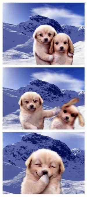 bad-puppy